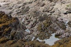 Cara Geological do penhasco do estudo, pembrokeshire, wales Imagens de Stock