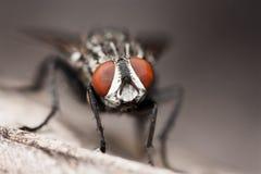 Cara grande de la mosca Fotos de archivo libres de regalías