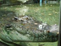 Cara grande dos crocodilos no jardim zoológico Fotografia de Stock