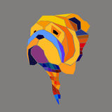 Cara inglesa del ejemplo del retrato de la raza del perro del dogo Foto de archivo libre de regalías