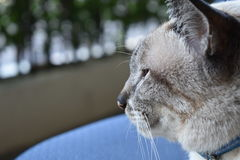 Cara lateral del gato Imagen de archivo