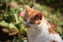 Cara lateral do gato Imagem de Stock