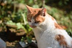 Cara lateral do gato Imagens de Stock