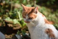 Cara lateral do gato Fotografia de Stock Royalty Free