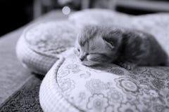 Cara linda del gatito Fotos de archivo libres de regalías