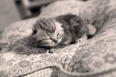 Cara linda del gatito Fotografía de archivo libre de regalías