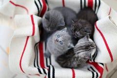 Cara linda, gatitos nuevamente llevados que miran para arriba Imagenes de archivo