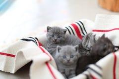 Cara linda, gatitos nuevamente llevados que miran para arriba Imagen de archivo libre de regalías