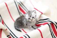 Cara linda, gatitos nuevamente llevados que miran para arriba Imagen de archivo