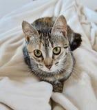 Cara pequena adorável de um gatinho bonito que olha o fotos de stock royalty free