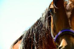 Cara pintada del caballo Fotografía de archivo