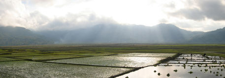 Cara ricefields with sunlight. Trough the sky - Ruteng - Flores - Indonesia - Panorama Stock Image