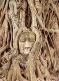 Cara tallada en árbol Imagen de archivo libre de regalías