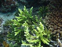 Cara verde del Th del mar Fotografía de archivo