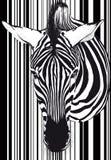 Cara y cuello del código de barras de la cebra Imágenes de archivo libres de regalías