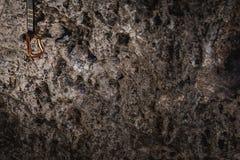 Carabine d'alpinisme de s'élever sur le mur rugueux de roche image libre de droits