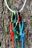 Carabiner con la corda sul fondo della natura Immagine Stock