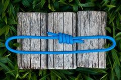 Carabiner och rep på en naturlig bakgrund royaltyfri foto