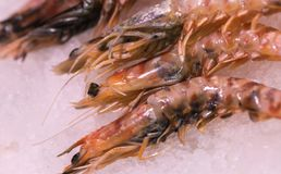 Carabinero shrimps on ice at local market stock photos