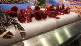 Carabineros,大红色虾 免版税图库摄影