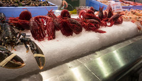 Carabineros, μεγάλες κόκκινες γαρίδες Στοκ φωτογραφία με δικαίωμα ελεύθερης χρήσης