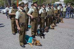 Carabineros Parade with dogs Stock Image