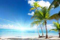Caraïbische overzees en palmen Stock Afbeeldingen