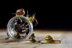Caracóis coloridos grandes e pequenos em um frasco de vidro Tabela de madeira Imagem de Stock