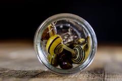 Caracóis coloridos grandes e pequenos em um frasco de vidro Tabela de madeira Foto de Stock