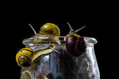 Caracóis coloridos grandes e pequenos em um frasco de vidro Tabela de madeira Fotos de Stock Royalty Free