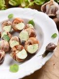 Caracóis com manteiga de alho Fotos de Stock