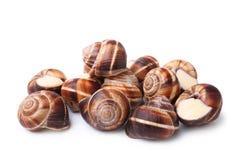 Caracóis comestíveis (escargot) fotos de stock royalty free