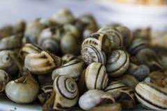 Caracóis cozinhados ou ascendente próximo do escargot imagens de stock