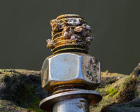 Caracóis de mar no parafuso Fotografia de Stock Royalty Free