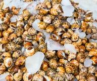 Caracóis de mar pequenos no mercado ainda vivo Imagem de Stock Royalty Free