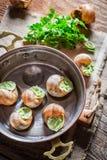 Caracóis deliciosos com manteiga de alho Imagem de Stock