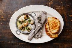 Caracóis do escargot de Bourgogne com manteiga de ervas do alho imagens de stock royalty free