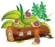 Caracóis e uma casa de madeira Fotografia de Stock Royalty Free