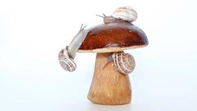 Caracóis em um cogumelo do boleto filme