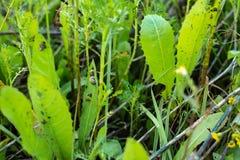 Caracóis nas folhas na floresta fotos de stock royalty free