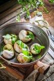 Caracóis quentes e frescos com manteiga de alho Imagem de Stock