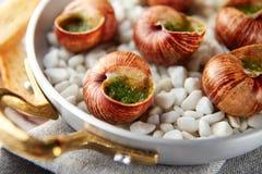 Carac?is do escargot com manteiga de ervas do alho fotografia de stock royalty free