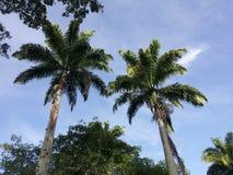 Caracas em sábado em Miranda Park Fotografia de Stock Royalty Free