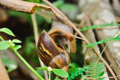 Caracol Fotos de Stock