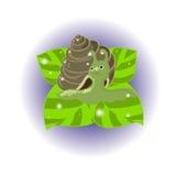 Caracol Imágenes de archivo libres de regalías