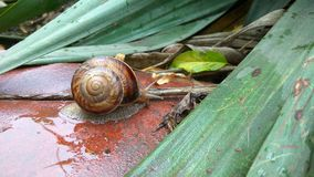 Caracol Foto de Stock Royalty Free