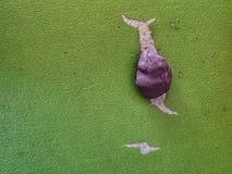 Caracol abstracto Foto de archivo libre de regalías