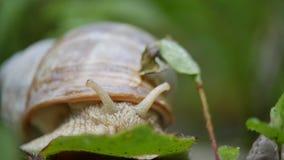 Caracol branco em uma folha verde da grama filme