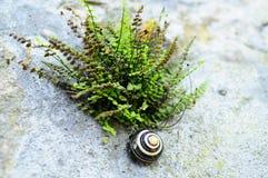 Caracol colorido na rocha pelo fern Imagens de Stock Royalty Free