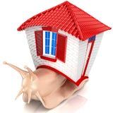 Caracol com casa pequena. Isolado. Fotos de Stock